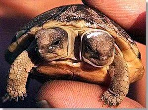 Tortoisepictures